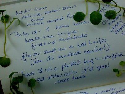 Watercress Notes