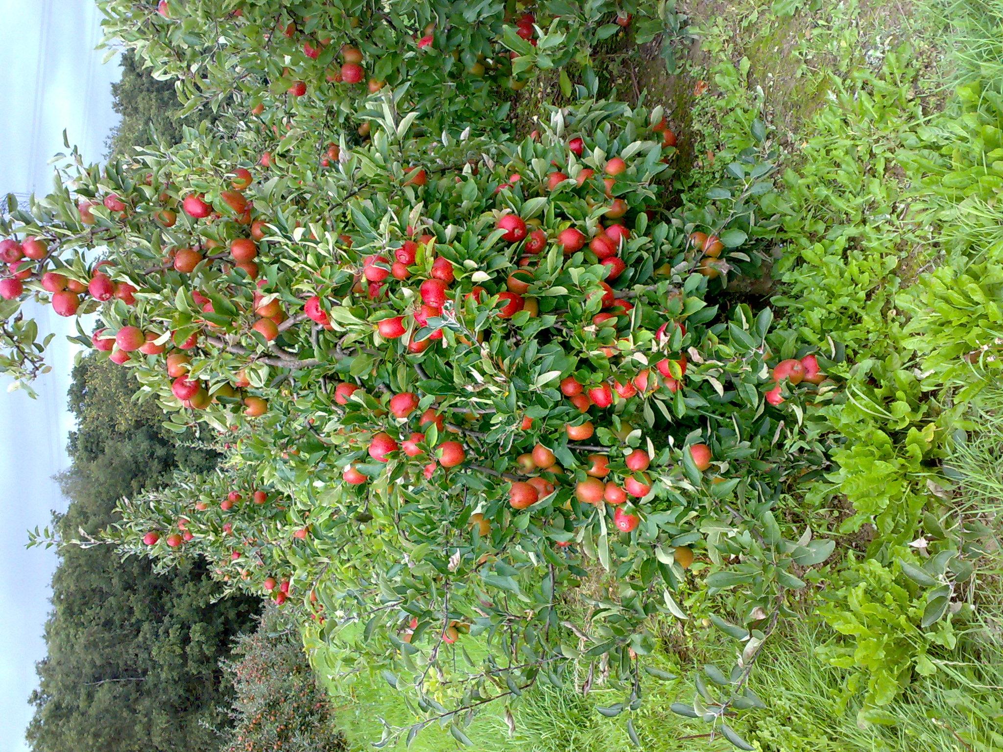 The healing biodiversitree ooto festival alison amazed for Fruit trees